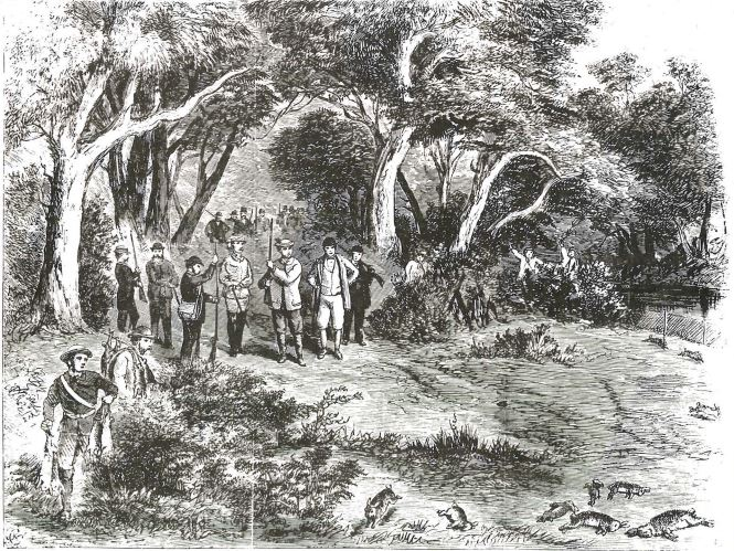 Prince Alfred shooting wild rabbits at Barwon Park