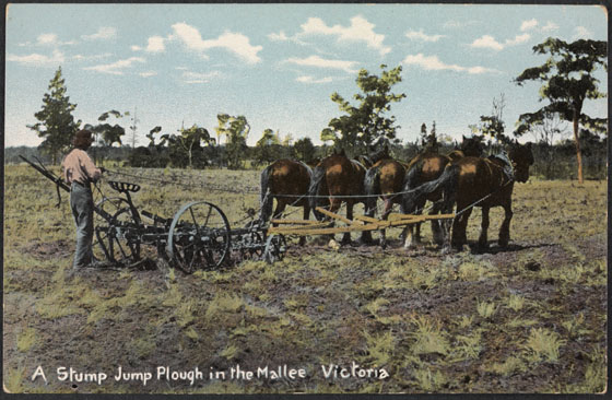 Stump jump plough in use in the Mallee, Victoria