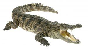 80s food trends - crocodile steaks not cool
