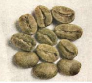 Coffee growers planted Arabica beans