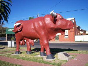 Mallee Bull, Birchip, Victoria