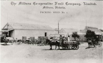 Packing shed, Mildura. Image: Australian Dried Fruits Association